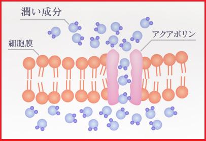 エイジスト美容液,毛穴,口コミ,幹細胞美容液